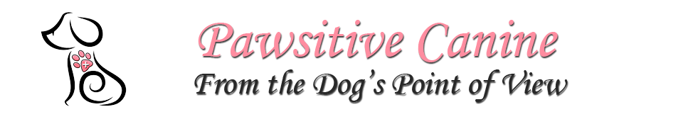 Orlando Dog Behavior Training | Winter Park Animal Behavior Specialist | Florida Pet Behaviorist