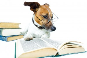 dog_with_book