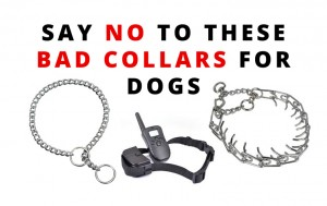 say-no-to-these-bad-collars-for-dogs-choke-prong-shock-collars